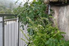 Orto idroponico in lana_164705