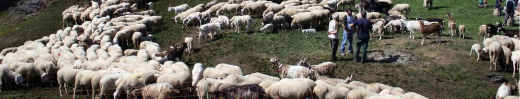 Kit di didattica a distanza sul ciclo della lana di pecora. Valcamonica